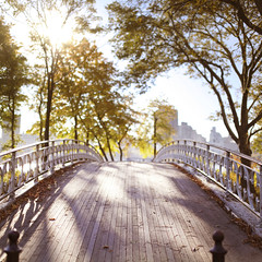 (brandonhuang) Tags: park new york city bridge trees light sun sunlight tree fall leaves sunshine canon 50mm leaf branch shine mark f14 branches central sigma foliage ii 5d brandonhuang