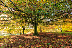 Autumn in Chatsworth (CarlG1975) Tags: park canon eos dale district sigma peak filter national nd gorge 1020mm chatsworth haida hoya padley monsal polarising 600d