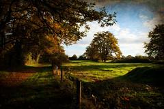 Par une matinée d'automne....