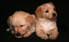 IMG_2277 (Pedro Montesinos Nieto) Tags: dog perro cachorros fragile mascotas miradas laedaddelainocencia frgiles