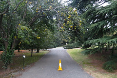 Quittenwarnung (the maki) Tags: park tree alarm japan warning tokyo shinjuku cone quince quitten