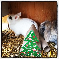 Hoe zouden ze de lampjes erin hangen? #bunnies #kerstmis (RoelJewel) Tags: rabbit bunny bunnies square lofi squareformat iphoneography instagramapp uploaded:by=instagram