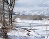 LE6A0727E (bigskywild) Tags: winter snow fog landscape march spring montana steam subzero stillwaterriver kenko14xtc canon100400mmlens nyemt bigskywild canon5dmiii ©paulaljensen march22014