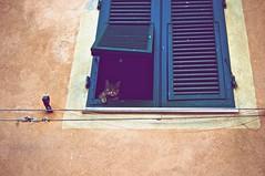 Gatto da guardia (Alex_Alpha) Tags: windows italy cats window cat italia sony tuscany alpha toscana gatto slt carducci a55 castagneto a55v
