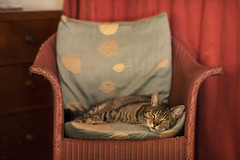 staying with friends, 3 (lesbru) Tags: cat interior tabby domestic stripy moggie d600