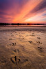 Goose Tracks (JCNixonPhoto) Tags: statepark sunset geese mud tracks goose delaware capehenlopen gordonspond leegndfilters