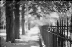 Borderline (Fabio Sabatini) Tags: paris france film analog fence asahi pentax bokeh zenit ilford jardindesplantes filmphotography xp2super400 filmisnotdead shootingfilm spotmaticspii helios40285mmf15 believeinfilm