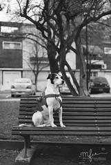 Olivia. (Marie) Tags: portrait blackandwhite bw dog pet nature animals garden bench puppy square backyard open perro