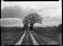 10-03-17-4 (salparadise666) Tags: voigtländer bergheil 9x12 heliar 135mm czj distar 2iii fomapan 400200 asa caffenol cl semi stand 35min nils volkmer vintage camera large format nature landscape tree rural germany niedersachsen hannover black white