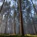 """Hobbit Vision"" (Thomas Vanderheyden) Tags: arbre brouillard brume colors couleur forest foret france fujifilm landscape light lumiere nature paysage picardie samyang12mm thomasvanderheyden tree xt1 hobbit"
