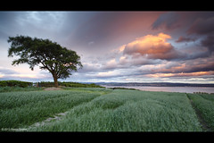 Gales at sunset (SwaloPhoto) Tags: sunset tree field clouds scotland very fife availablelight farming windy northsea crop ze culross firthofforth estuaries leefilters canoneos5dmkii distagont2821