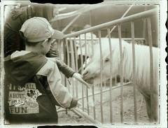 Vom Pony-Fttern (Bi&Me) Tags: vienna wien bw animal daylight bobo cage negative bi 2013 polaroid100 fujifp3000b