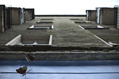 Schmetterlinge (kohlmann.sascha) Tags: building window nature animal facade butterfly insect lens photography fotografie dof balcony balkon fenster natur technik depthoffield technique insekt gebude nokton voigtlnder tier fassade schmetterling schrfentiefe objektiv nokton25mm1095 ser8141040 ilobsterit