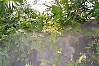 A visit to Foster Botanic Gardens (33)