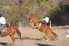 DSC_0453 (jaramillohectorsergio) Tags: criollo caballos campana palenque jinete poncho gauchos botas monta gaucho doma jineteada sanpedrodejujuy cachullani