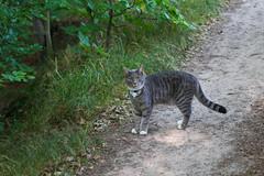 Curious cat (Håkan Dahlström) Tags: cat grey se skåne sweden sverige uncropped helsingborg f40 ramlösa 2013 skånelän brunnspark canoneos100d ¹⁄₁₀₀sek ef2880mmf284lusm 2819072013183730