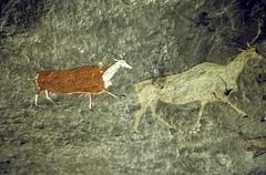 bushmen rock art (francois f swanepoel) Tags: drakensberg bushmen san shaman shamaan shamen bushmenpaintings rockart eland antelope