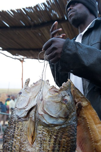 Selling dried Tiger Fish at Mongu Harbour, Zambia. Photo by Patrick Dugan, 2012.