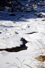 Bunny Footprints (eyshin05) Tags: snow rabbit bunny