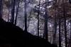 "...  nella foresta ("" paolo ammannati "") Tags: flowers italy panorama mountain me foglie alberi forest italia photographer top natura ombre io cielo tuscany toscana terra nebbia autunno colori viaggi montagna verna rami bosco casentino arezzo foresta laverna faggio chiusidellaverna paoloammannati complimenti effettinaturali mygearandme blinkagain"
