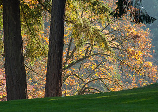 Fall colors, Mount Tabor Park