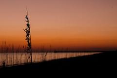 Sunset Through The Dunes (Matthew Slowik) Tags: ocean sunset red bird beach water clouds island oak sand surf horizon refraction oceanlife