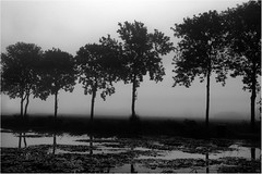 Mist (Wilm!) Tags: bw mist netherlands fog noiretblanc pentax zwartwit nb brielle zw k7 kaaisingel