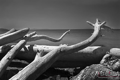 """Legno sul mare • <a style=""""font-size:0.8em;"""" href=""""http://www.flickr.com/photos/49106436@N00/10668187443/"""" target=""""_blank"""">View on Flickr</a>"""
