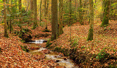 Hidden Streamlet in the Woods (Batikart) Tags: travel autumn trees light plants brown sunlight green fall nature water leaves yellow rural creek forest canon reflections germany landscape geotagged carpet outdoors deutschland leaf flora rocks stream wasser europa europe day stitch earth path laub herbst natur tranquility romance foliage