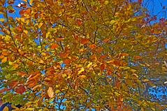877-16L (Lozarithm) Tags: calne leaves kx pentaxzoom 1224 smcpda1224mmf40edalif