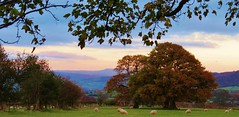Pastoral countryside .... (Sandalwood19) Tags: wales brecon pastoral autumnwinter