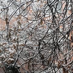 با اینکه این واسه ما من و @miladbamdad اولین #برف نیست ولی در عوض #اولین برف دم دست هست... (pezHman tt) Tags: و این من در ما با برف ولی هست دست اولین دم اینکه نیست عوض واسه miladbamdad