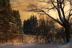 "Winter Dawn (""Photo Guy"") Tags: rawimages"
