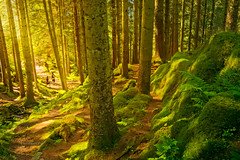 Enchanted Forest (Charn High ISO Low IQ) Tags: trees summer nature norway forest bergen scandinavia enchanted dxoopticspro radlab canon6d