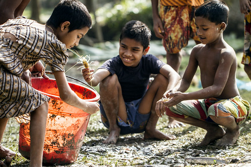 Children sorting out shrimps in Khulna, Bangladesh. Photo by Felix Clay/Duckrabbit.
