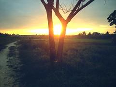 Lao Sunrise (niksin) Tags: sun tree laos sunbeam vientiane niksin nikolaisindorf