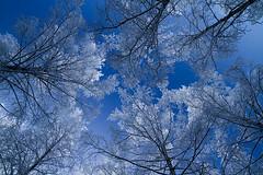 1022 (P. Koskela) Tags: trees winter snow cold nature forest suomi finland frost freezing lumi talvi mets puut pirkkala kylm kuura tamronspaf1750mmf28xrdiiildasphericalif
