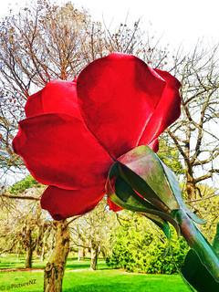 The metal Rose