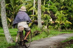 Rice paddy cycling. (Tiomax80) Tags: life street old travel trees people bali man max green nature field hat bike indonesia asian cycling photo interesting nikon rust asia flickr raw tour rice paddy coconut candid rusty 85mm vert elderly biking elder tradition nikkor dslr ricefield indonesian touring homme ubud paddyfield rizires balinese traditonal catel indonsie vieillard rizire tiomax balinais indonsien d7000 oldmanonabike tiomax80 mcatel maxcatel vision:outdoor=0971 vision:plant=0826