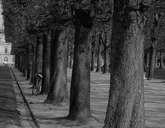 Tree Alley (yonkis_at_34) Tags: pictures life voyage park new city trip travel favorite paris france tree beautiful out landscape fun this see landscapes photo check amazing alley nikon rocks flickr quiet photographer pics postcard picture ciudad most enjoy fabulous capture luxembourg popular postale carte  photographe objektif nikond200 my kartpostal francelandscapes yonkis34