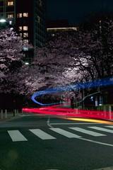Tokyo Sakura @ Night (Thomo13) Tags: road street japan night canon cherry eos lights tokyo stream blossom sakura 5d lightstream 5dmark2