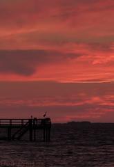 Bokeelia Sunset with Great Blue Heron Photo Bomb (tropicdiver) Tags: sunset gulfofmexico clouds pier florida pineisland greatheron pineislandsound bokeelia