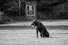 DogTraining- April-2014_DSC12830017.jpg (orig_lowolf) Tags: usa dog bird oregon nikon lakeoswego georgerogerspark d300s sigmaaf150500mmf563apodgoshsm