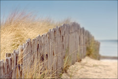beach fence (heavenuphere) Tags: sea bw netherlands grass fence europe path dunes nederland gi noordwijk zuidholland tothesea noordwijkaanzee 55250mm
