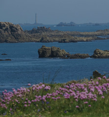 de plougrescant  brhat (laetitiablabla) Tags: world mer lighthouse france flower water fleur rock flora brittany eau bretagne breizh armor coastline phare paysages rocher manche flore cotes ailleurs littoral plougrescant heaux