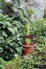 "Amorphophallus titanum - Botanischer Garten Berlin • <a style=""font-size:0.8em;"" href=""http://www.flickr.com/photos/25397586@N00/19146979723/"" target=""_blank"">View on Flickr</a>"