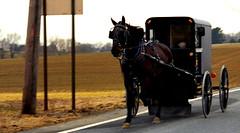 horse and buggy (bluebird87) Tags: horse film nikon f100 amish epson v600 buggy c41 dx0