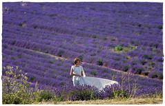 La sposa e la lavanda (marypink) Tags: summer focus estate pov lavander fields francia sposa provenza lavanda campi valensole fioritura 70300mmf4056 nikond7200