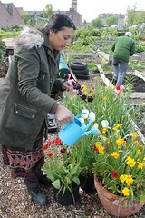 NVG_allotment_May (22)