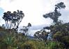 PURACE, COLOMBIA - cloud forest/ ПУРАСЕ, КОЛУМБИЯ - туманный лес (El Ruso AG) Tags: forest bosque bosqueneblino bosquenuboso cloudforest моховойлес туманныйлес лес popayan purace parquenacional nationalpark попаян пурасе национальныйпарк нацпарк colombia colombian colombiano columbia колумбия колумбийский южнаяамерика латинскаяамерика латиноамериканский южноамериканский southamerica latinamerica